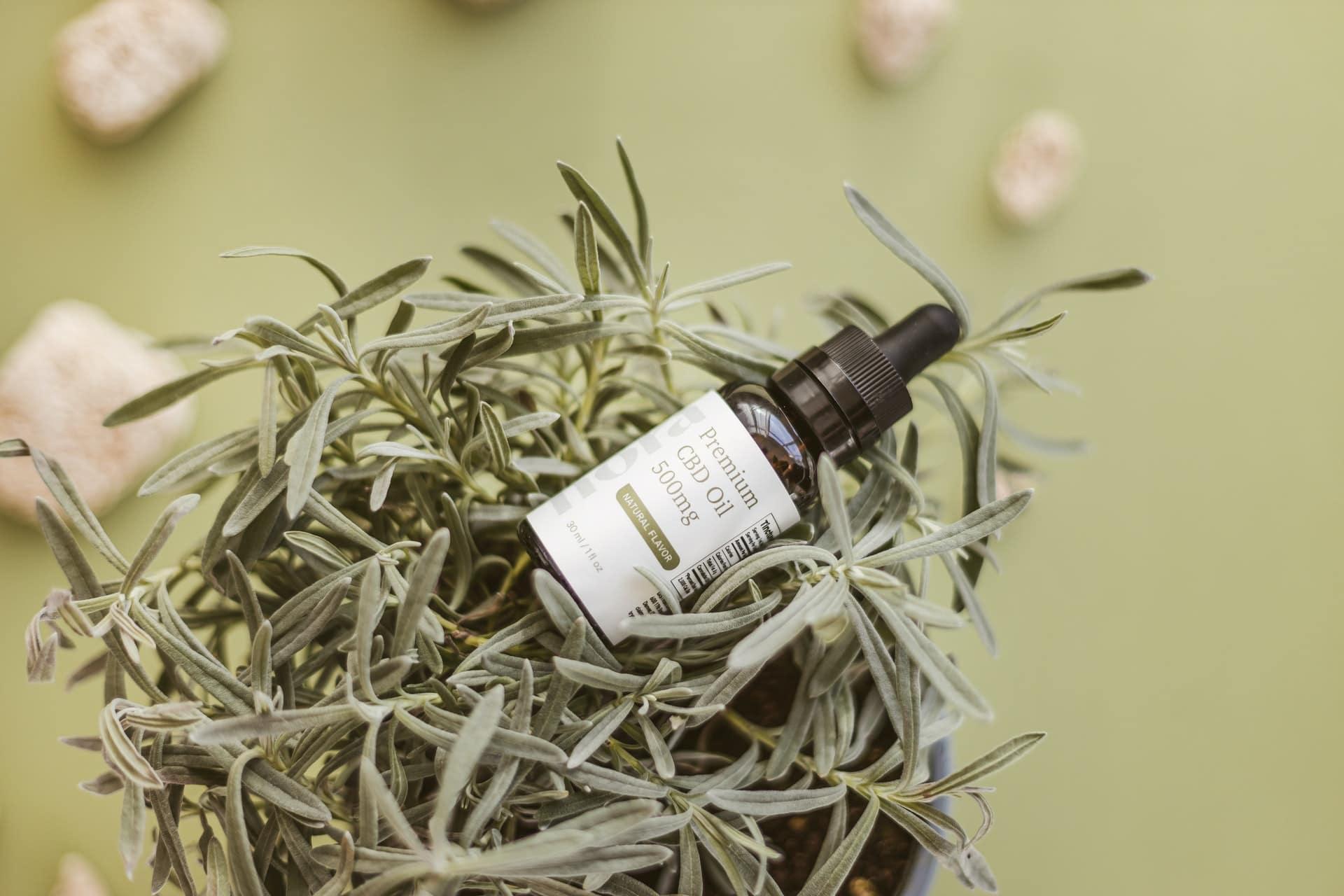 Nación Cannabis | 5 mitos sobre el cannabis medicinal para tratar el dolor
