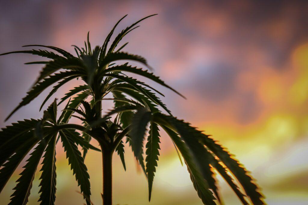 cannabis invertir en 2021