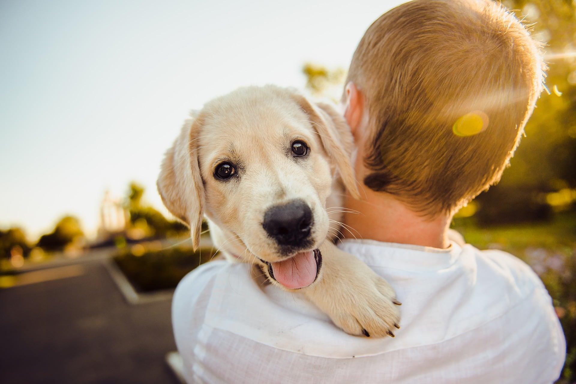Nación Cannabis | ¿El THC es tóxico para los perros?