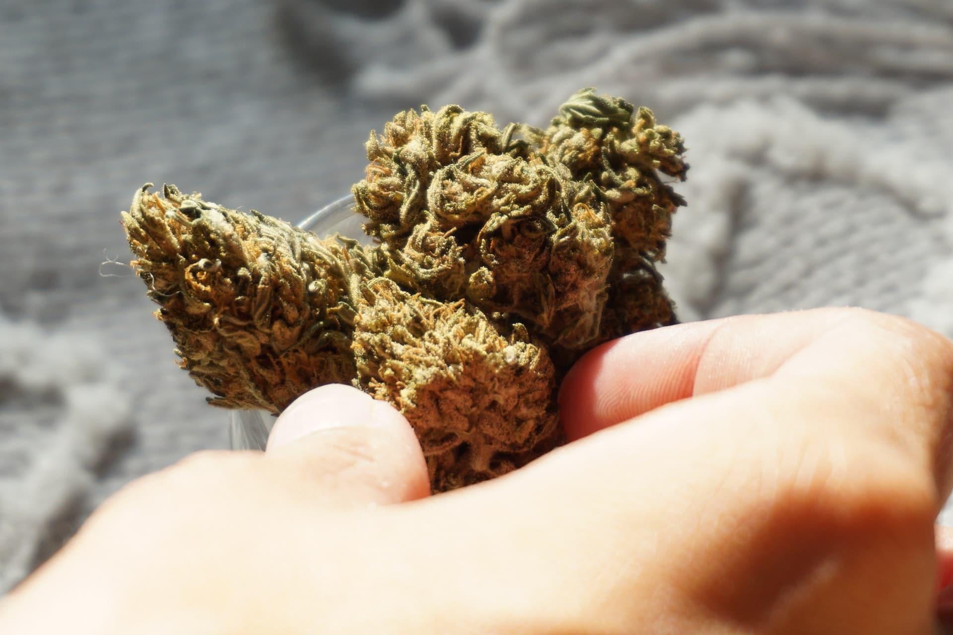 Nación Cannabis | Colorado busca restringir uso de marihuana medicinal