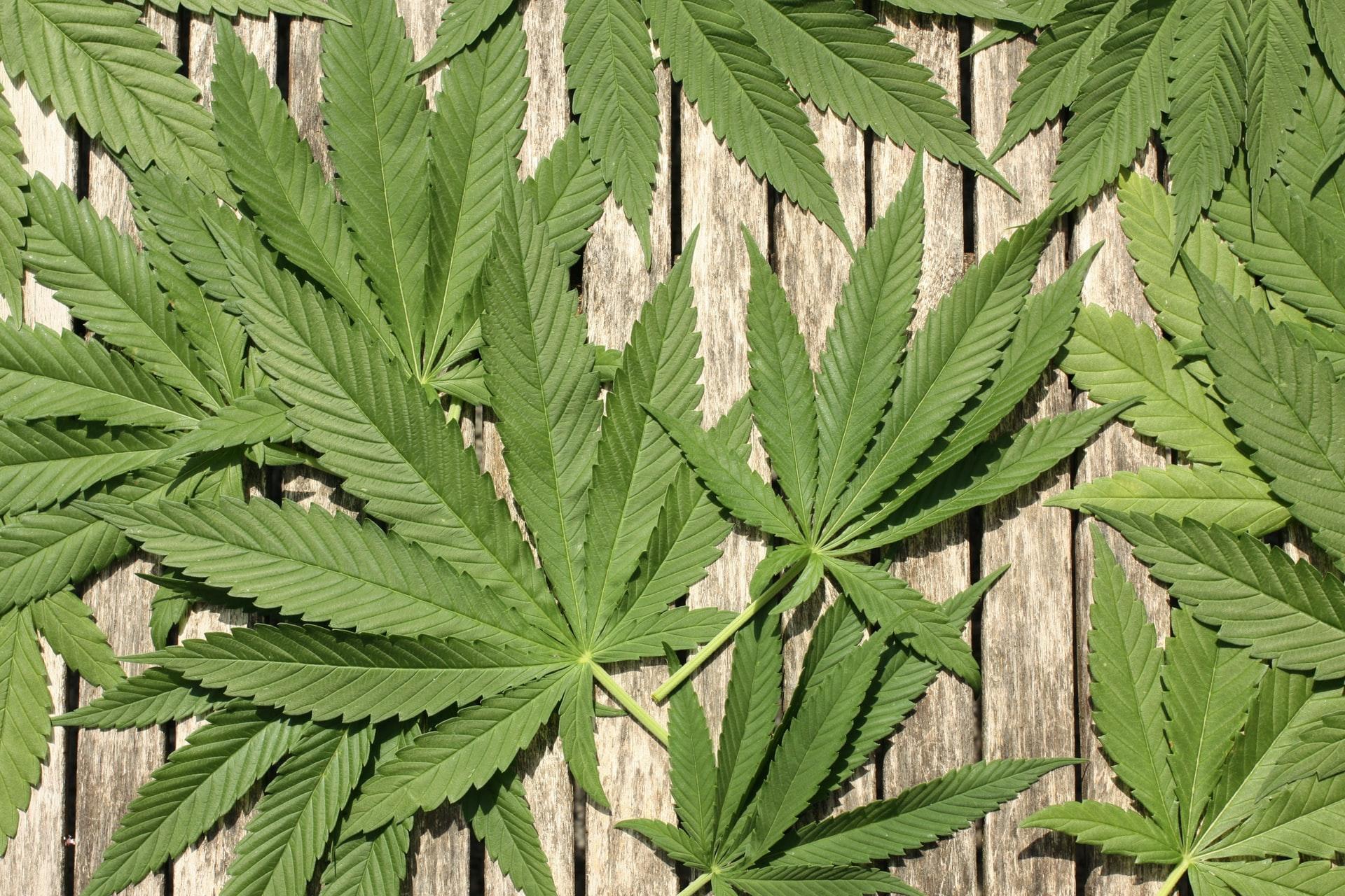 Nación Cannabis | 10 mitos que NO debes tomar en cuenta si quieres cultivar cannabis